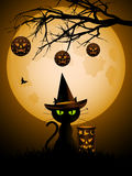 Halloween cat and lanterns Stock Images