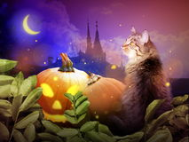 Halloween cat in night Stock Photos