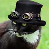 Halloween cat. Portrait of a cat with green eyes wearing dracula hat for halloween Stock Images