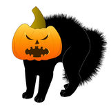 Halloween cat with pumpkin Stock Photos