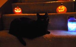 Halloween Cat Trick oder Festlichkeit lizenzfreie stockbilder