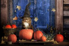 Halloween Cat. A cat wearing pointed witches hat and sitting amongst pumpkins on doorstep of rustic cabin with blue door stock photo