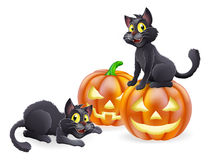 Halloween cats and pumpkins Royalty Free Stock Photos