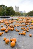 Halloween in Central Park Royalty Free Stock Photo