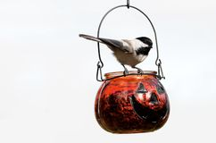 Halloween chickadee. Stock Images