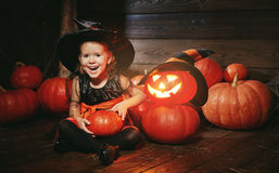 Halloween. child little witch with lantern pumpkin Jack Stock Photography