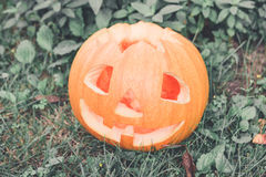 Halloween.  Close up of one Jack-o-Lantern. scary pumpkin with a smile  in green forest, outdoor. Halloween. Close up of one Jack-o-Lantern. scary pumpkin with Royalty Free Stock Images