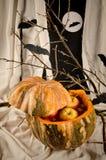 Halloween cocktail Stock Photos