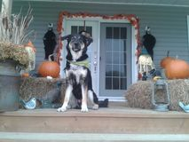 Halloween con vegas Fotografia Stock