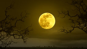 Halloween concept background with full moon Royalty Free Stock Images