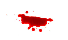 Halloween concept : Blood splatter on white background . Royalty Free Stock Photo