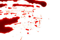 Halloween concept : Blood splatter on white background . Royalty Free Stock Photography