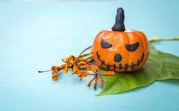 Halloween concept, funny Halloween pumpkin on green leaf Stock Image