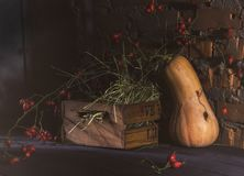 Halloween concept. Pumpkin in the dark cellar. Mystical scene. Pumpkin, a wooden box and thorn branches of a dogrose in a dark basement. Halloween Mood royalty free stock images