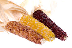 Halloween Corns Isolated Royalty Free Stock Images