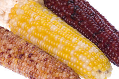 Halloween Corns Isolated Stock Photo