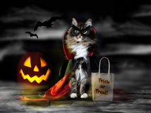 Halloween Count Dracula Cat. A cat dressed for Halloween in Count Dracula cape and black mask with trick or treat bag, jack-o-lantern pumpkin and bats in misty stock photo