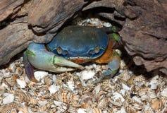 Halloween Crab Royalty Free Stock Photos