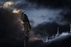 Halloween crow Stock Photo
