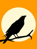 Halloween Crow silhouette Stock Photos