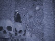 Halloween crow and skulls Stock Photo