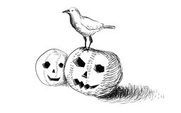 Halloween crow  spooky pumpkin. Halloween crow sit on the spooky pumpkin heads Stock Images