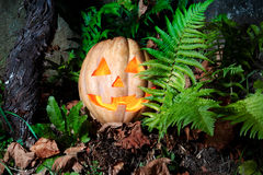 Halloween cute and funny pumpkin in the grass with dry leaves an Stock Photography