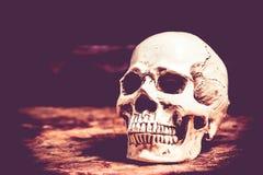 halloween czaszka Zdjęcie Stock