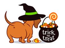Free Halloween Dachshund Puppy Dog, In Witch`s Hat With Black Trick Or Treat Cauldron Filled With Candy Corn, Candy Pumpkins And Royalty Free Stock Photos - 153333768