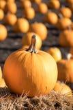 Halloween-Danksagungs-Kürbisflecken Ein großer Kürbis im foc Lizenzfreie Stockfotos