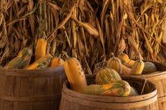 Halloween, Danksagungssaisonfeiertagsfeier eine Vielzahl von Kürbiskürbissen auf Anzeige im Stilllebenfallhintergrund mit Mais lizenzfreie stockfotos
