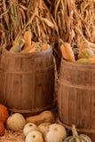 Halloween, Danksagungssaisonfeiertagsfeier eine Vielzahl von Kürbiskürbissen auf Anzeige im Stilllebenfallhintergrund mit Mais stockbilder
