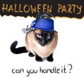 Halloween-de grappige gespannen onrustige Siamese Dolkomische Kat van de partijbanner Stock Afbeelding