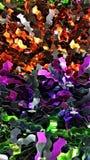 Halloween-de Textuurachtergrond van de Kleurenfolie Royalty-vrije Stock Fotografie