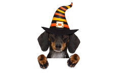 Halloween-de truc van de spookhond of behandelt royalty-vrije stock foto
