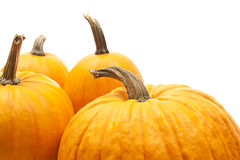 Halloween decoration. Orange pumpkins  for halloween decoration Stock Image