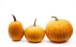 Halloween decoration. Tree orange pumpkins in line for halloween decoration Stock Photo