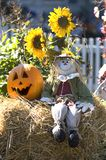 Halloween decoration. With scarecrow, pumpkin and sunflowers Royalty Free Stock Image