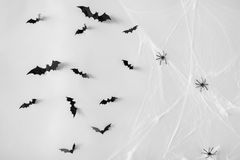 Halloween decoration of bats and spiders on web Stock Photography