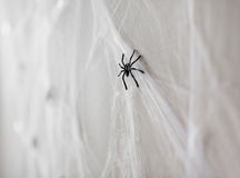 Halloween decoration of black toy spiders on web. Halloween and decoration concept - black toy spiders on artificial cobweb Royalty Free Stock Photos