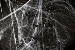 Halloween decoration of black toy spiders on web Stock Photography