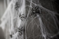 Halloween decoration of black toy spiders on web Stock Images
