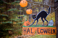 Halloween decoration cat and pumpkin Jack. On the tree in the woods Royalty Free Stock Photo