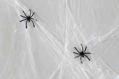 Halloween decoration of black toy spiders on web. Halloween and decoration concept - black toy spiders on artificial cobweb Stock Image