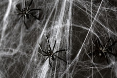 Halloween decoration of black toy spiders on web. Halloween, decoration and horror concept - black toy spiders on artificial cobweb Stock Image
