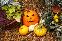 Halloween decoration with pumpkins Stock Images