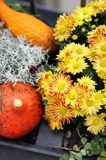 Halloween decorations with pumpkin and lot of flowers Stock Photos