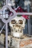 Halloween-Dekoration - Schädel mit Blumen um seinen Kopf und beleuchteten Augen sitzt innerhalb eines Glaskastens auf einem Süßes stockbild