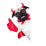 Halloween devil dog Stock Images