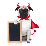 Halloween devil dog Royalty Free Stock Photography